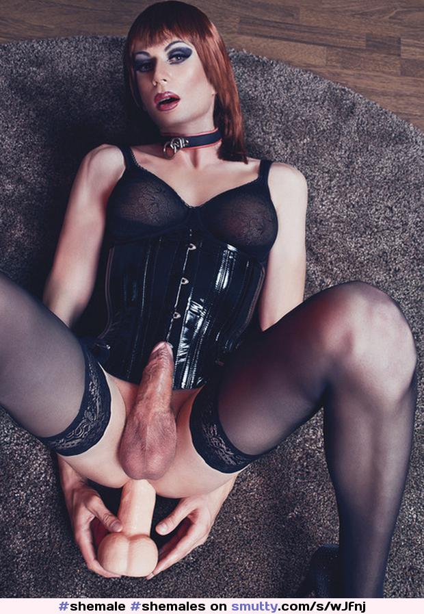 Ladybois Shemales Sissies Trannies And Traps Slutload 1